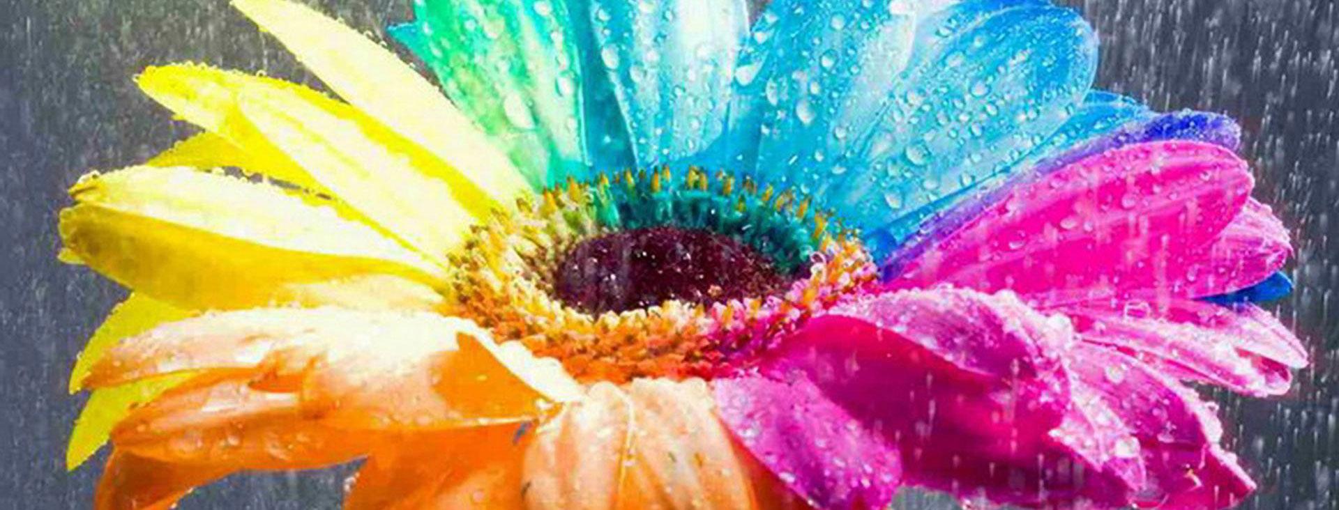 Фразеология цвета в английском языке