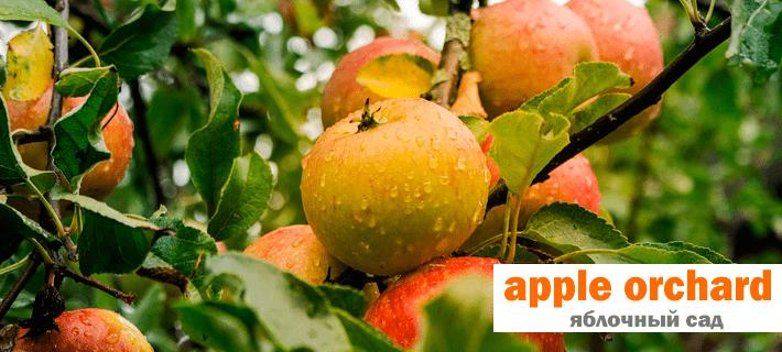 Яблочный сад на английском языке