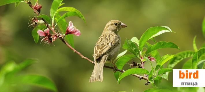Птица на английском языке