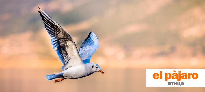Птица на испанском языке