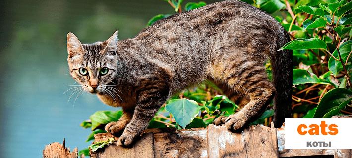 Коты, кошки на английском языке