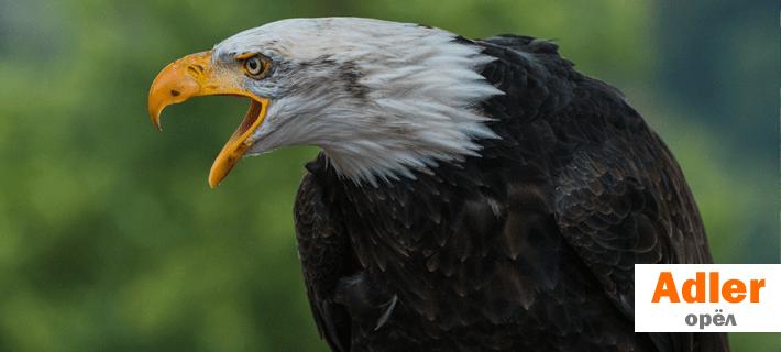 Птицы на немецком языке