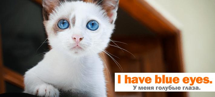 Голубые глаза котёнка перевод на английский язык