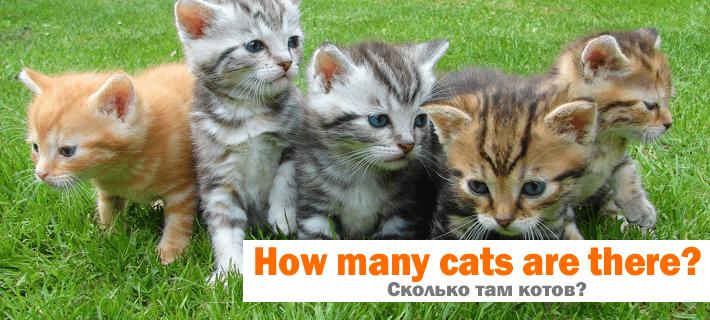 Перевод фразы Сколько там котов? на английский
