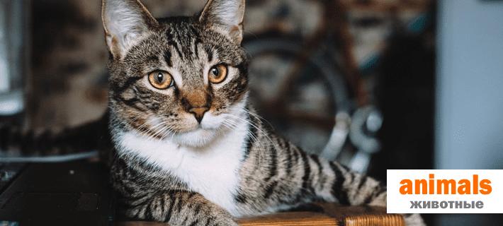 Слово животные на английском языке. Идиомы с животными