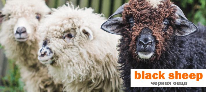 Черная овца на английском языке. Английские идиомы с животными