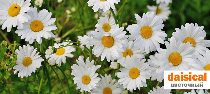 Цветок, цветочный на английском языке