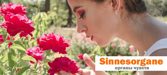 Красивая девушка нюхает цветок