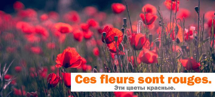 Поле красных цветов. Красный мак